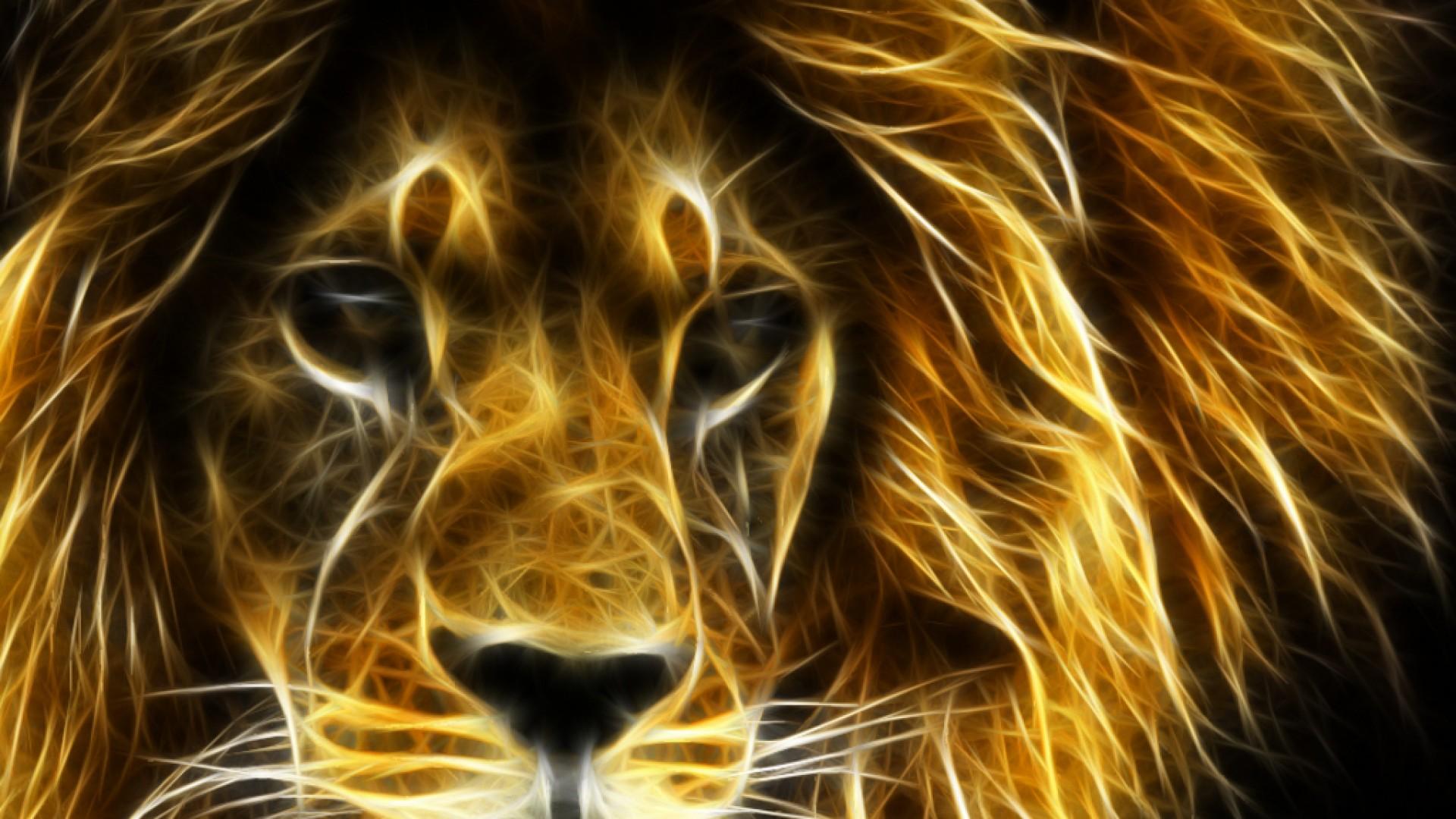 Lion Wallpaper Hd 1080p Wallpapersafari