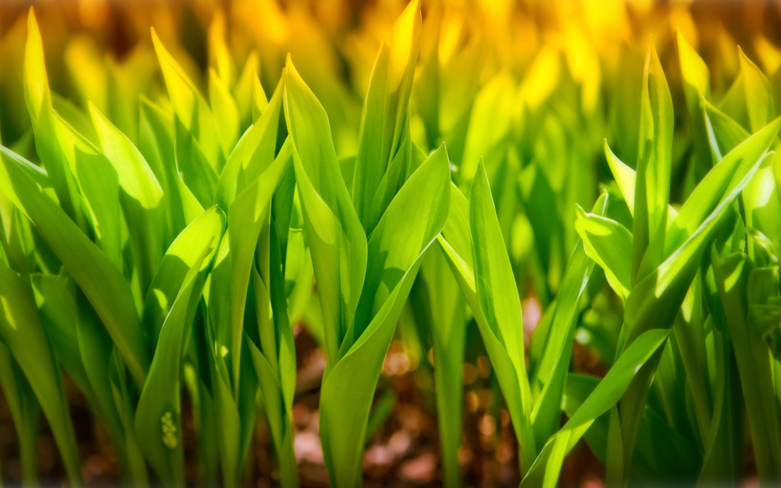 Plantas Verdes Display Naturalezacool Images Nature Wallpaper 2560x1600