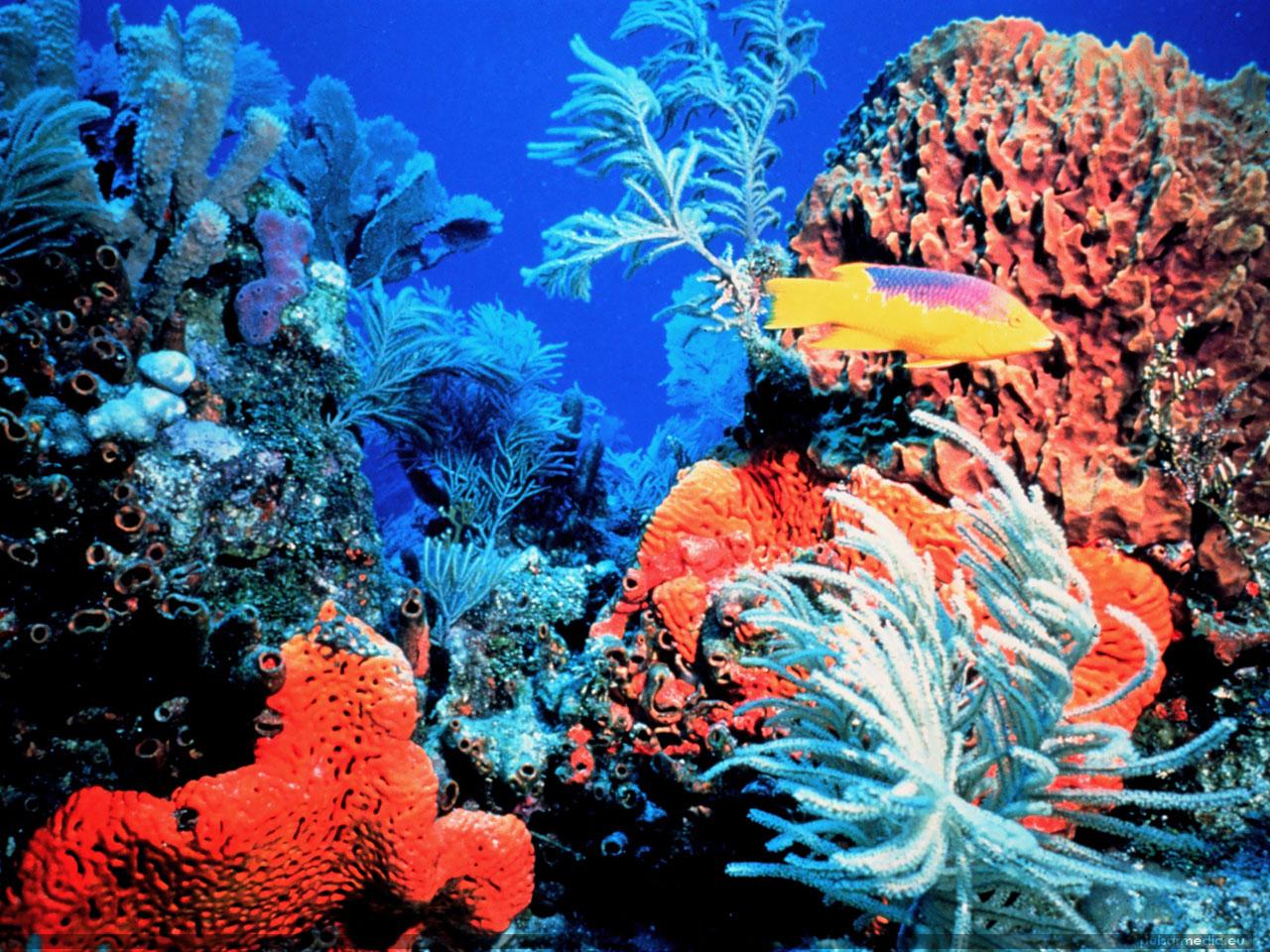 Coral Reef Florida Keys Ocean Life 11280x960 Deluxe Wallpaper Ocean 1280x960