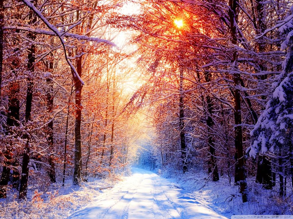 Winter Scenes 4K HD Desktop Wallpaper for 4K Ultra HD TV Wide 1024x768