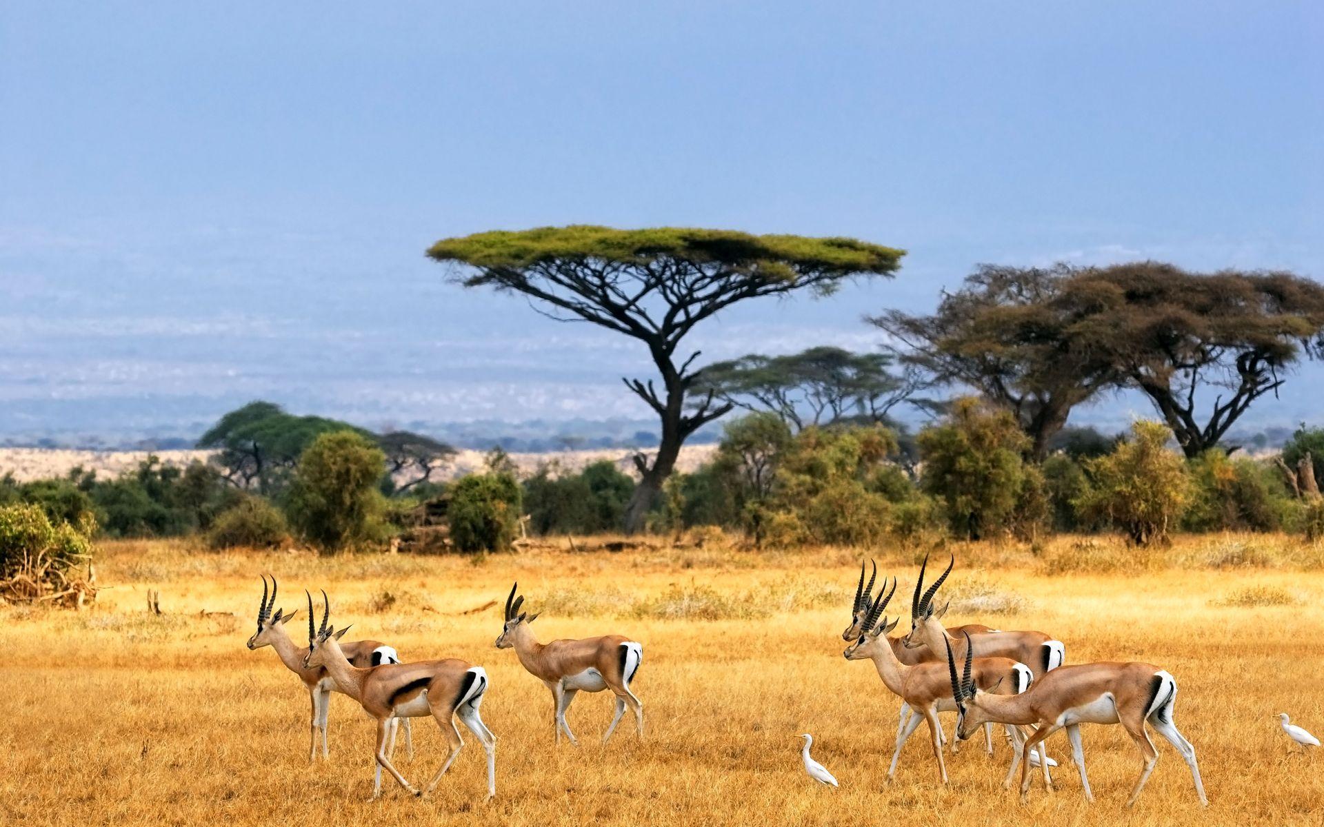 47 Safari Wallpaper Backgrounds On Wallpapersafari