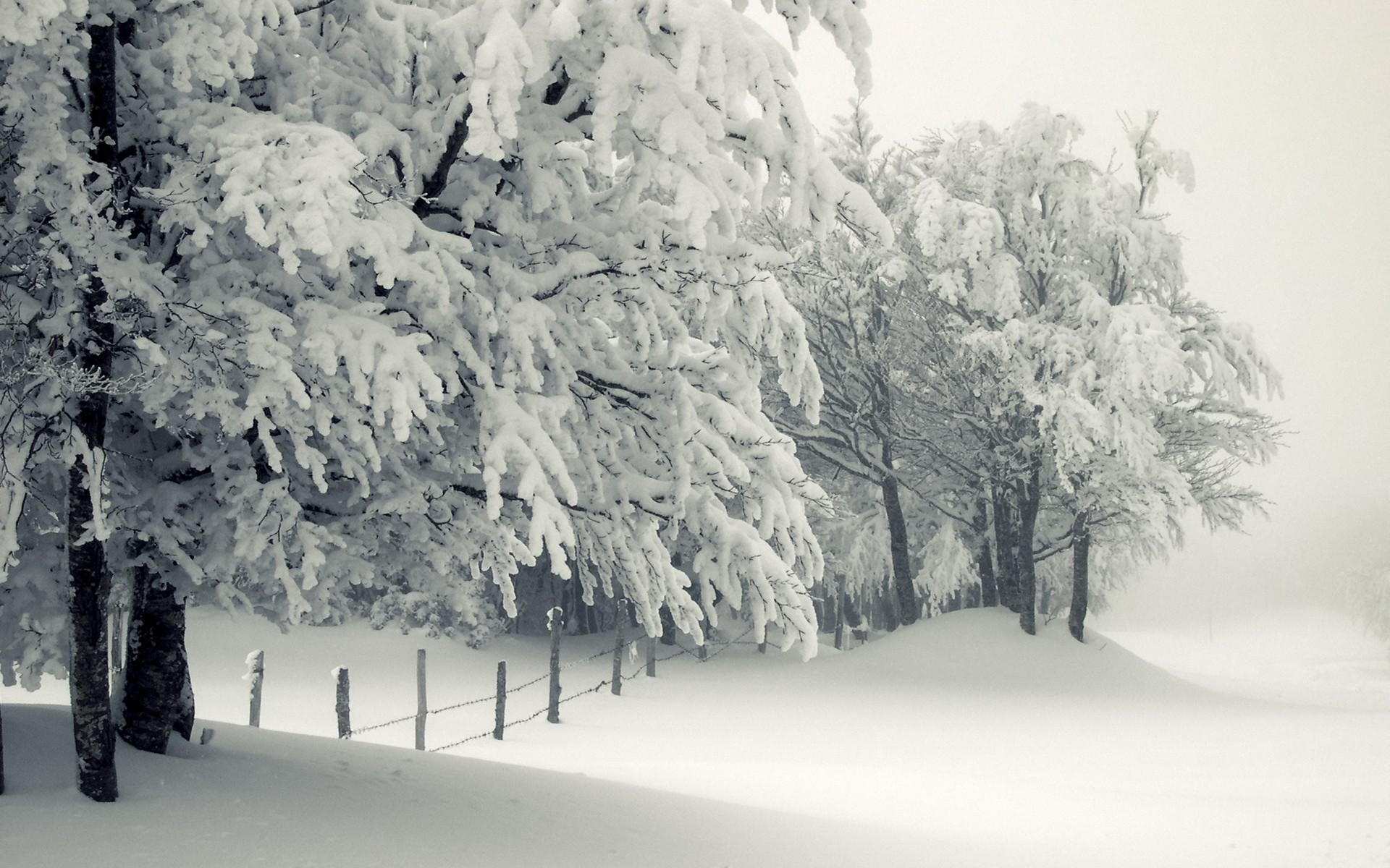 Blizzard Winter Hd Wallpaper Wallpaper List 1920x1200