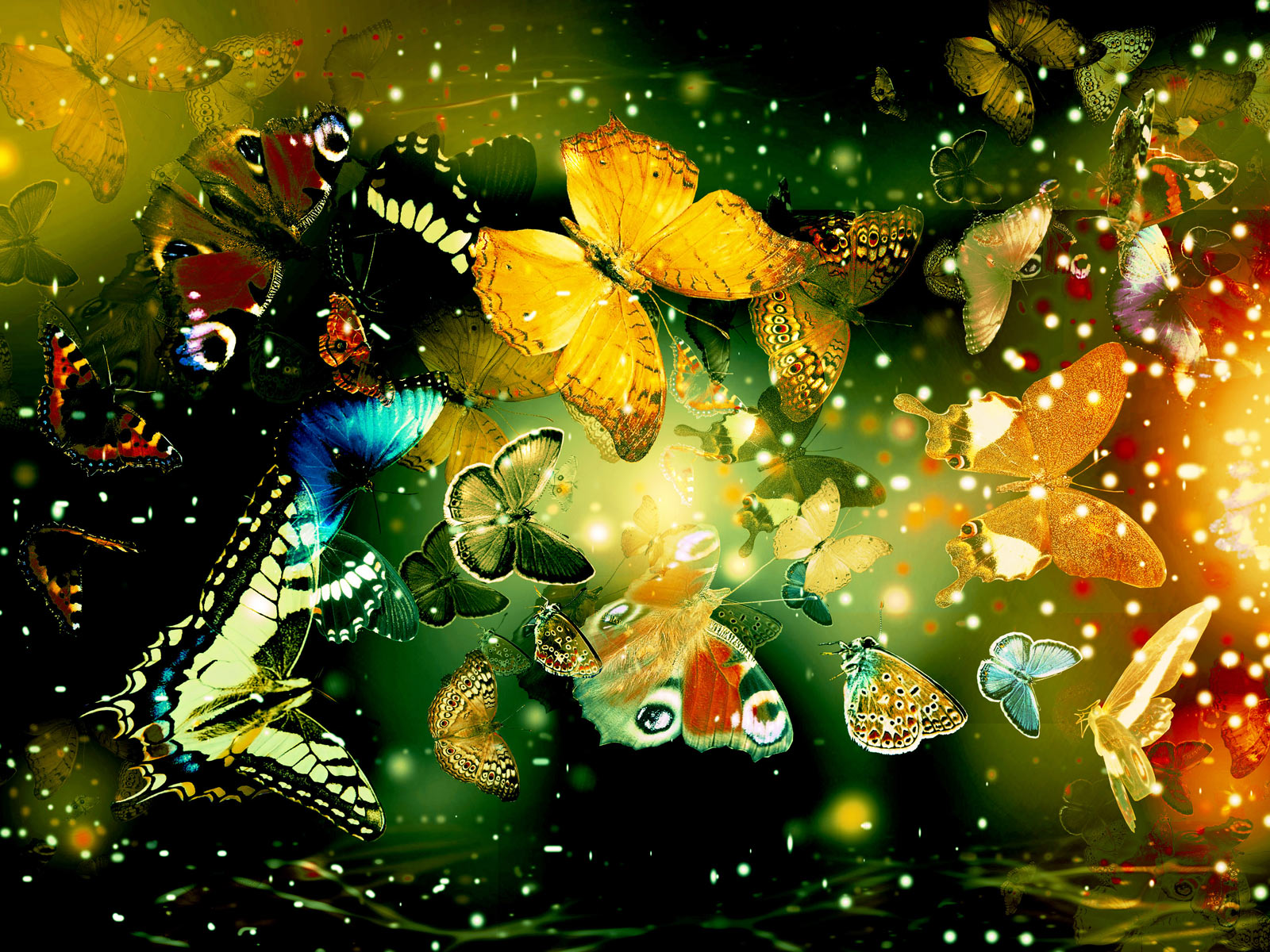 Butterflies desktop backgrounds hd Wallpaper High Quality Wallpapers 1600x1200