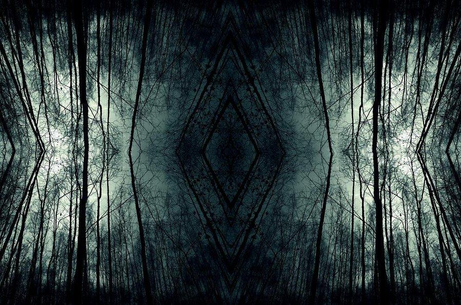 dark forest wallpaper wallpapersafari