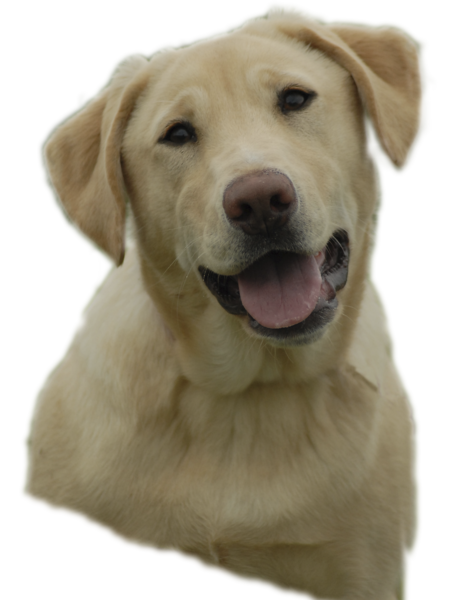 Yellowlab image 457x600