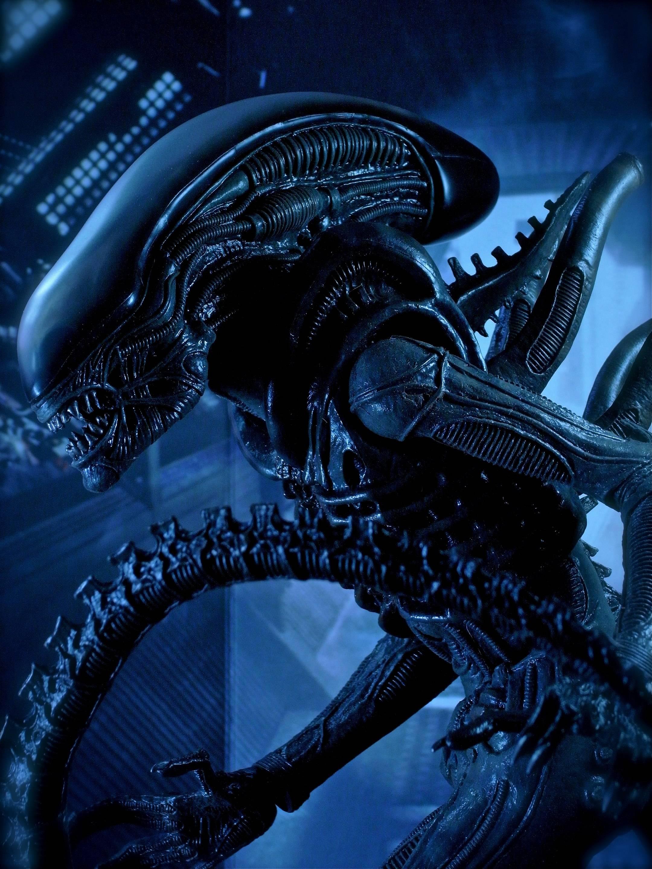 Aliens Movie 21602880 Wallpaper 810308 2160x2880