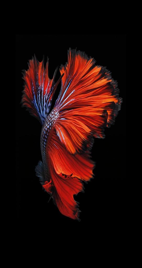 iPhone 6 Plus Moving Wallpaper WallpaperSafari