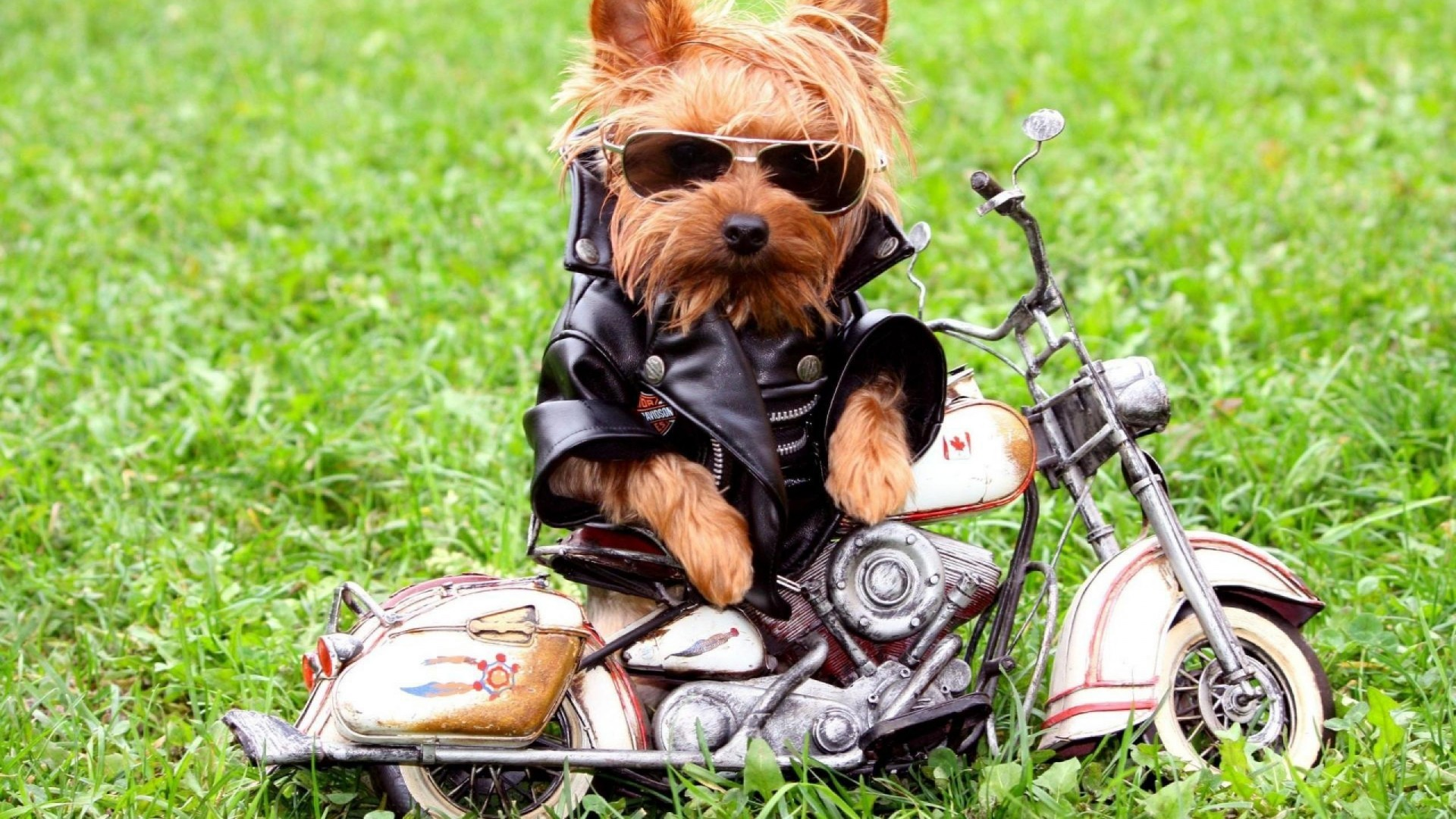 Dog Funny HD Wallpapers Download Desktop Wallpaper Images 1920x1080