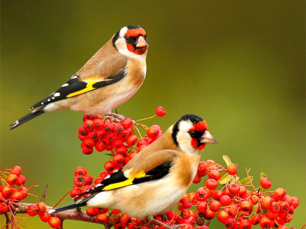 1024x768px birds wallpaper free download wallpapersafari