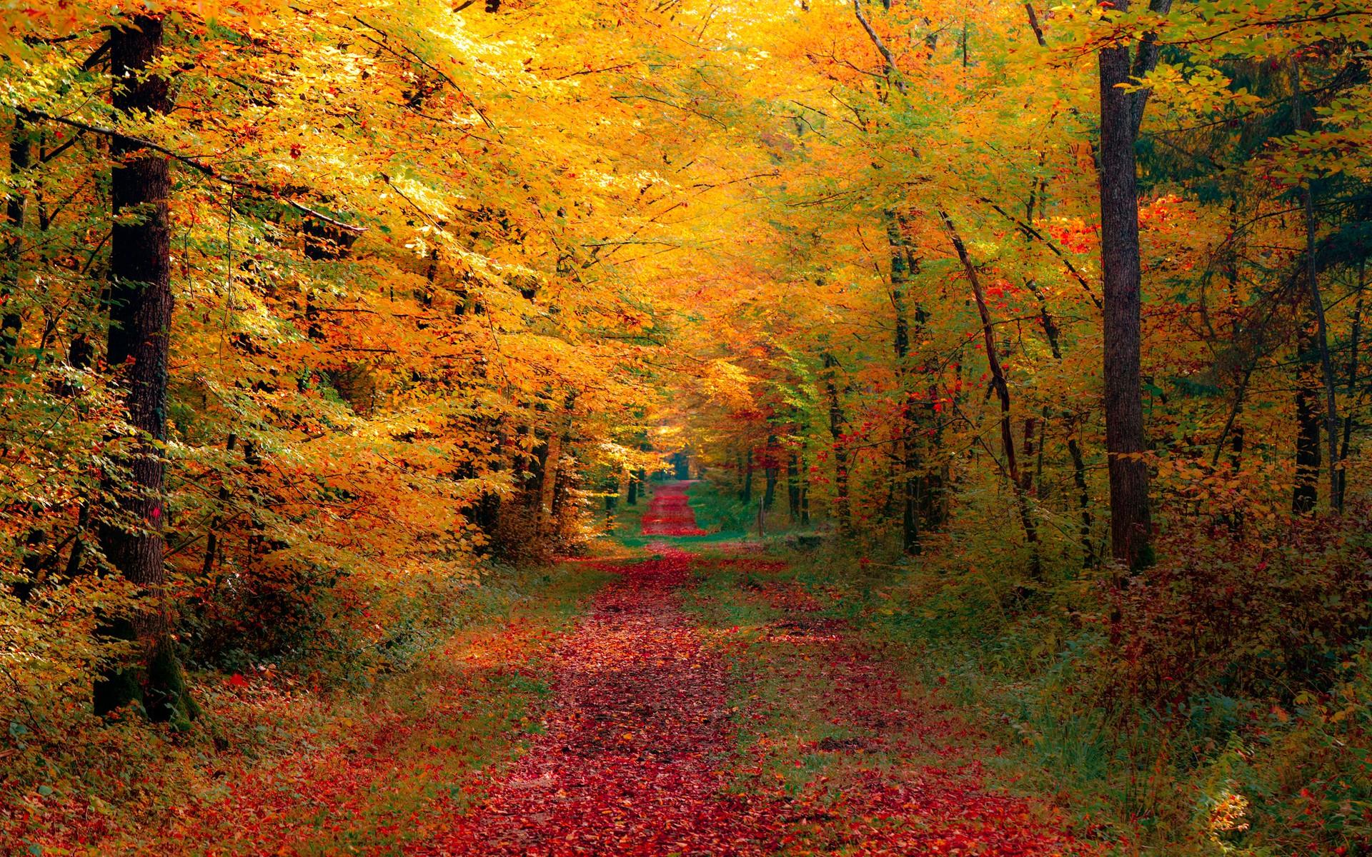 1920x1200 autumn forest desktop pc and mac wallpaper