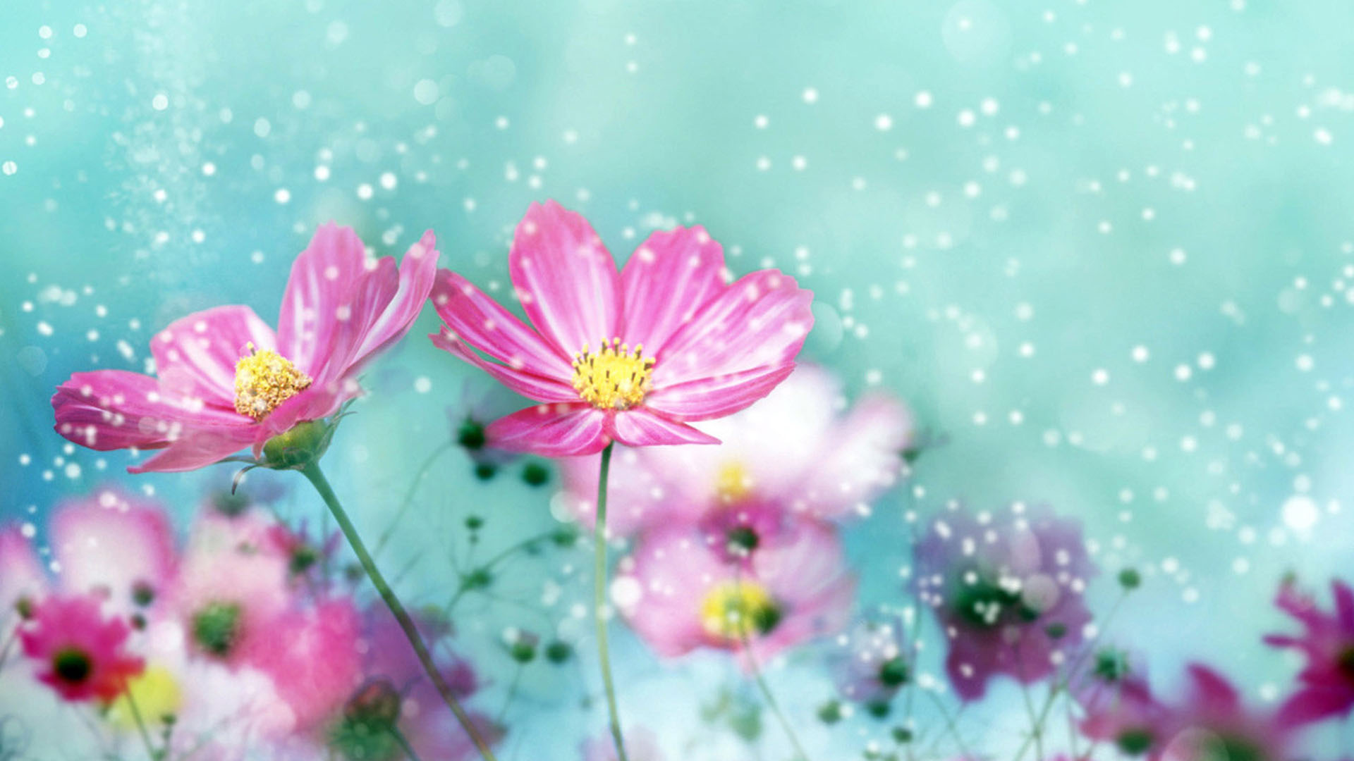 Flower Wallpapers Best Wallpapers 1920x1080