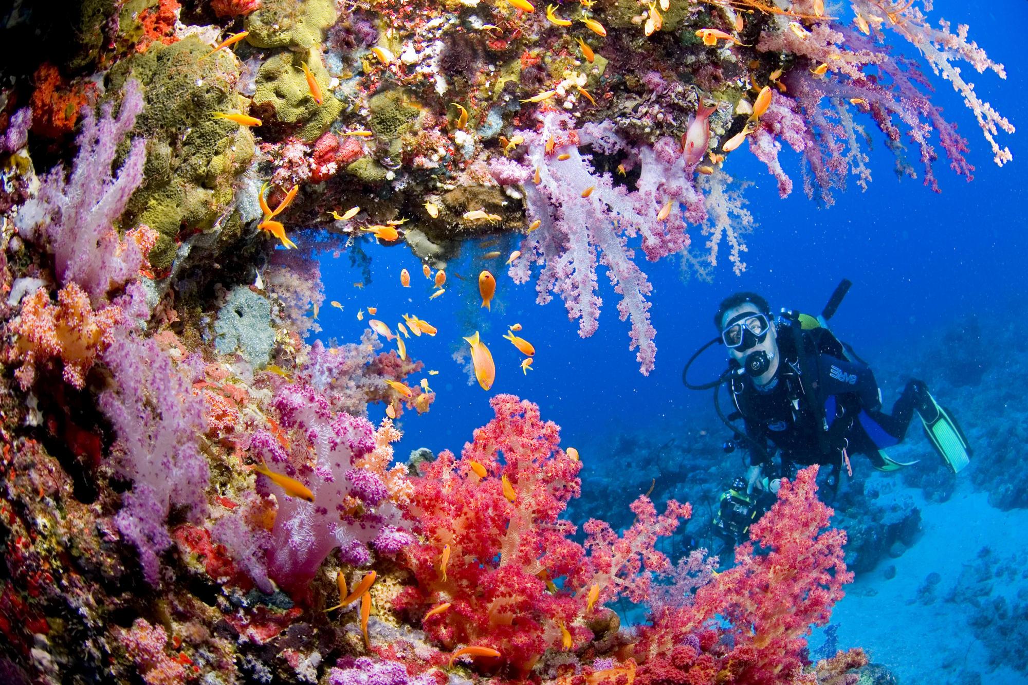 Sports scuba diving ocean sea underwater coral reef people wallpaper 2000x1333