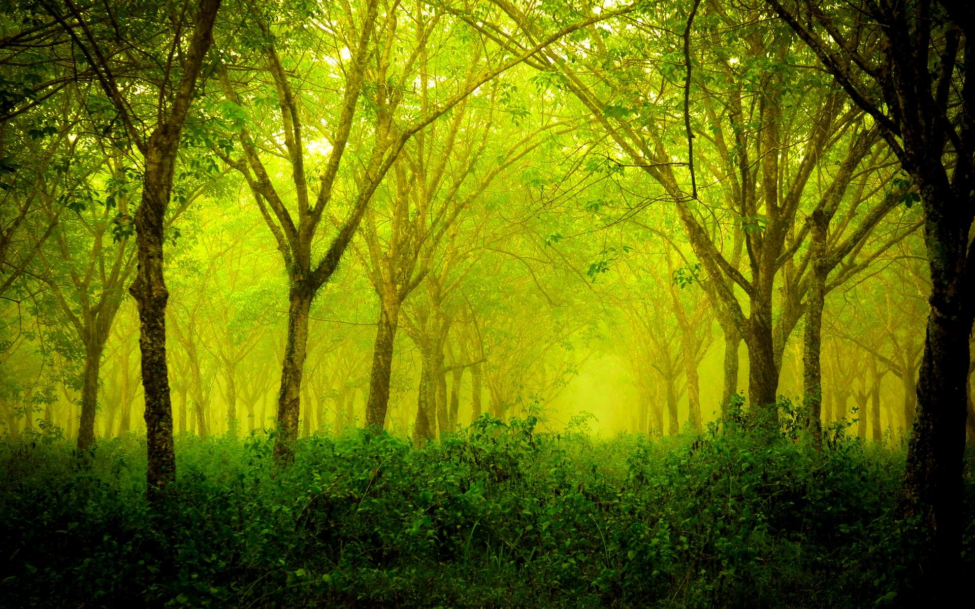Green Forest Wallpaper HD