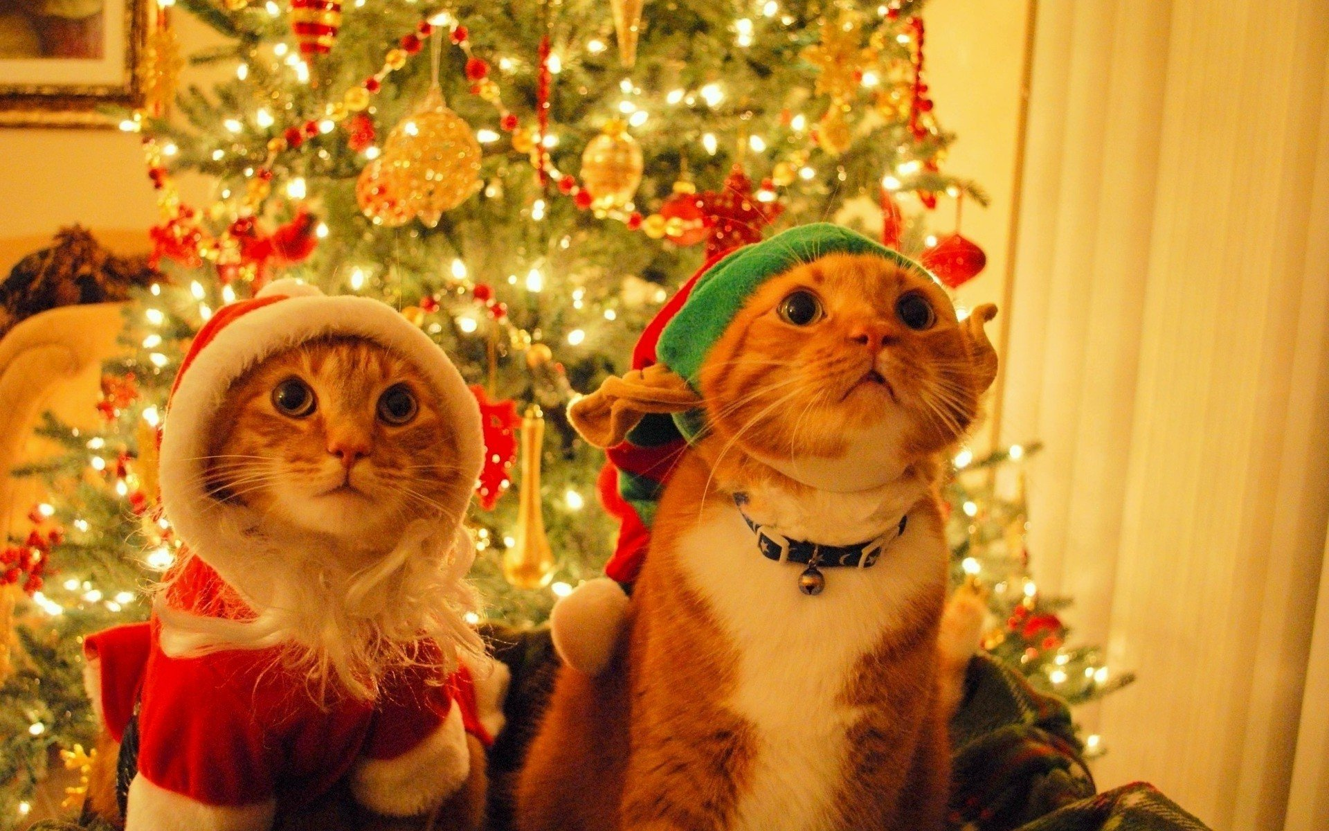 Christmas Cat Wallpaper Wallpapersafari
