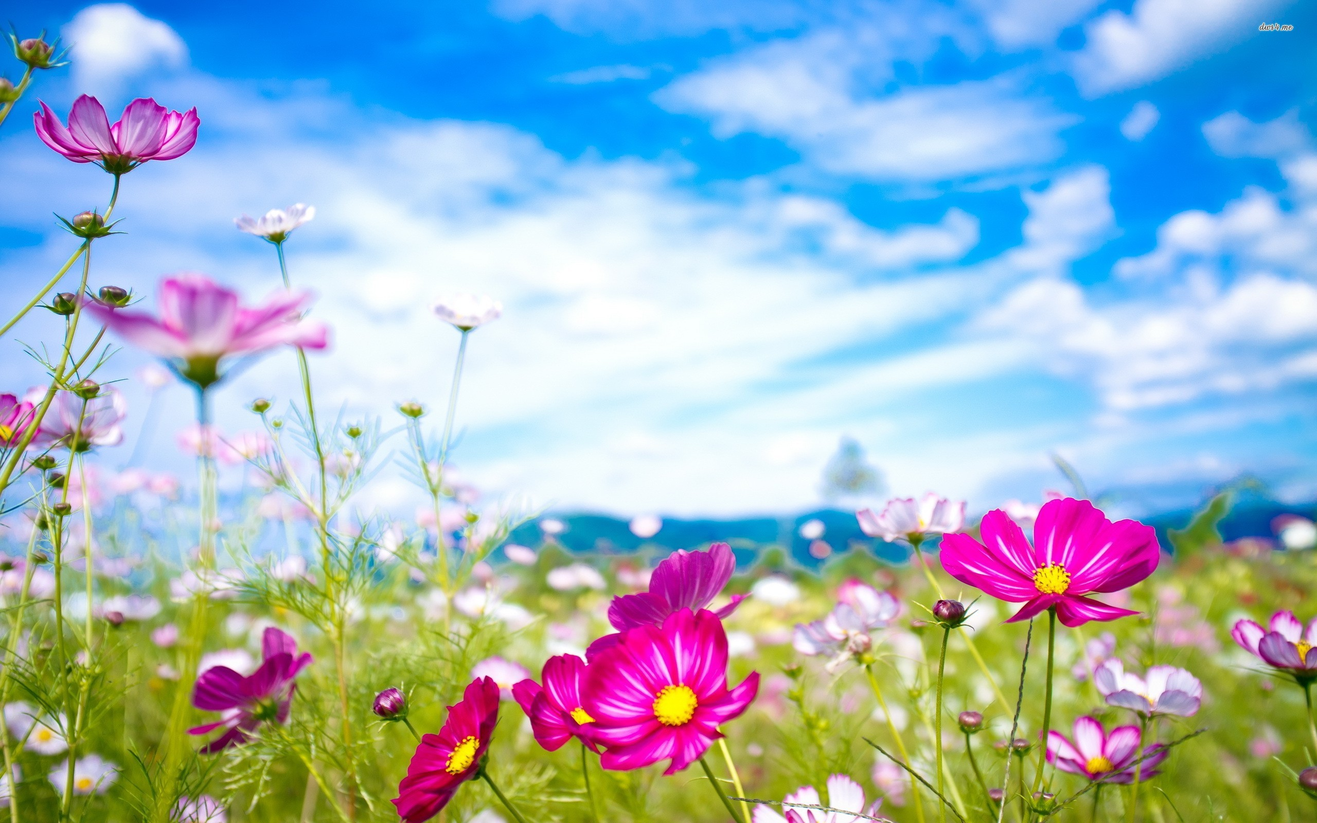 Summer Flowers With Skyline Wallpaper Background 45427726 2560x1600