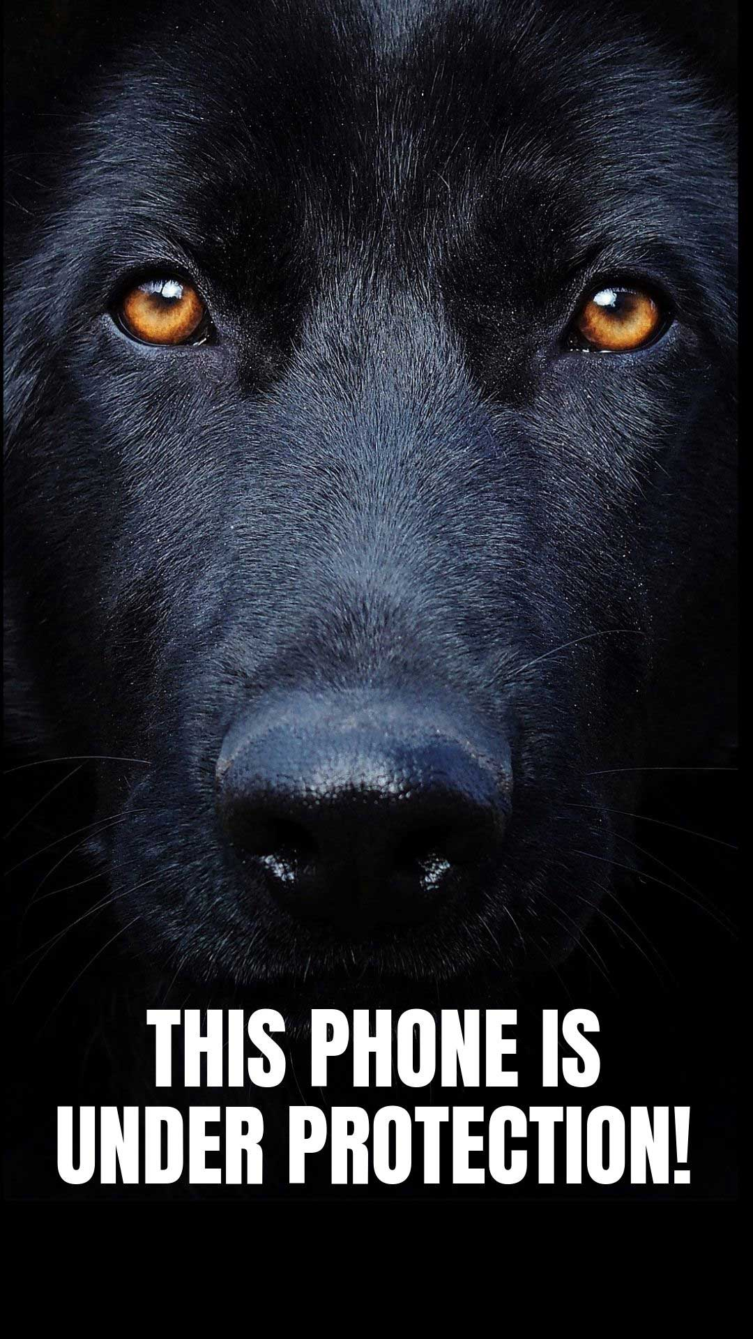 Dog Phone Wallpapers   Top Dog Phone Backgrounds 1080x1920