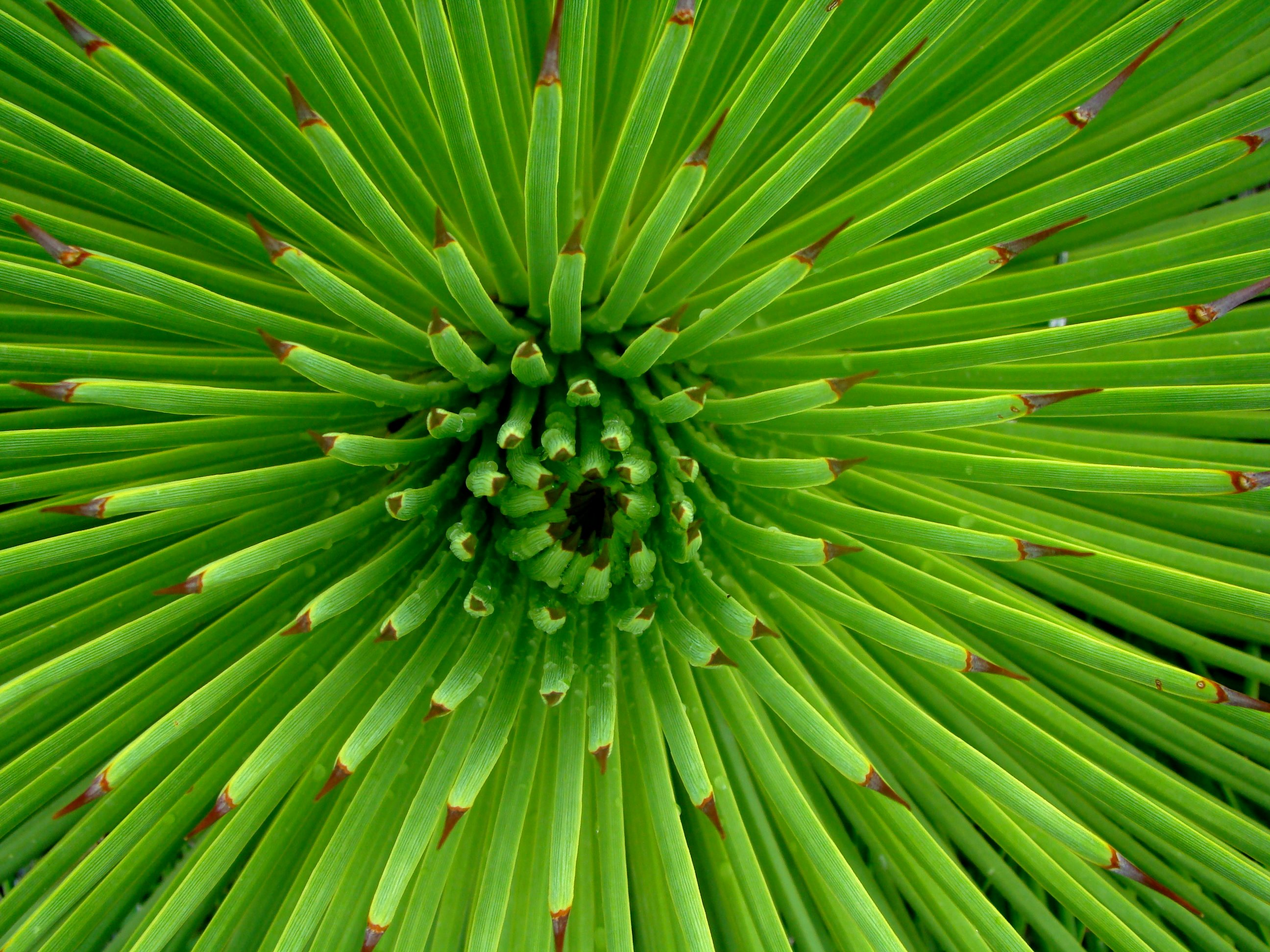blogspotcom201209green flower wallpaperhtml 2592x1944