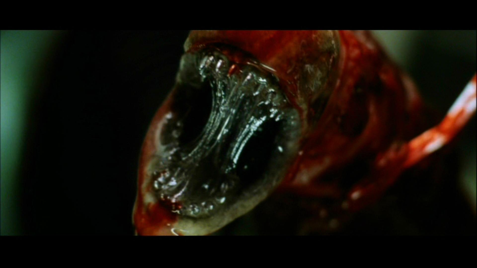 Movie   Alien Resurrection   Alien Wallpaper 1920x1080