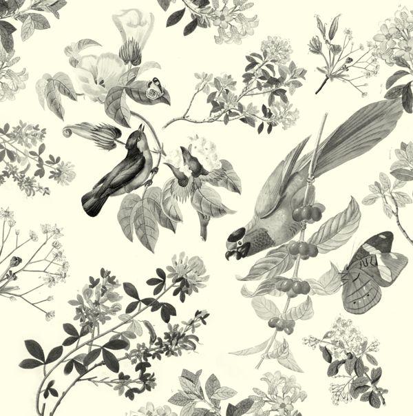 Vintage bird wallpaper   Interior ideas Pinterest 600x604