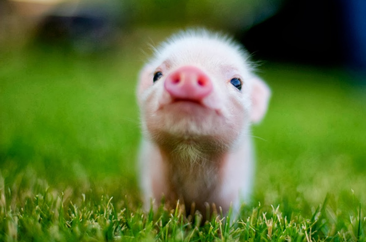 Cute Baby Animal Wallpaper Pictures