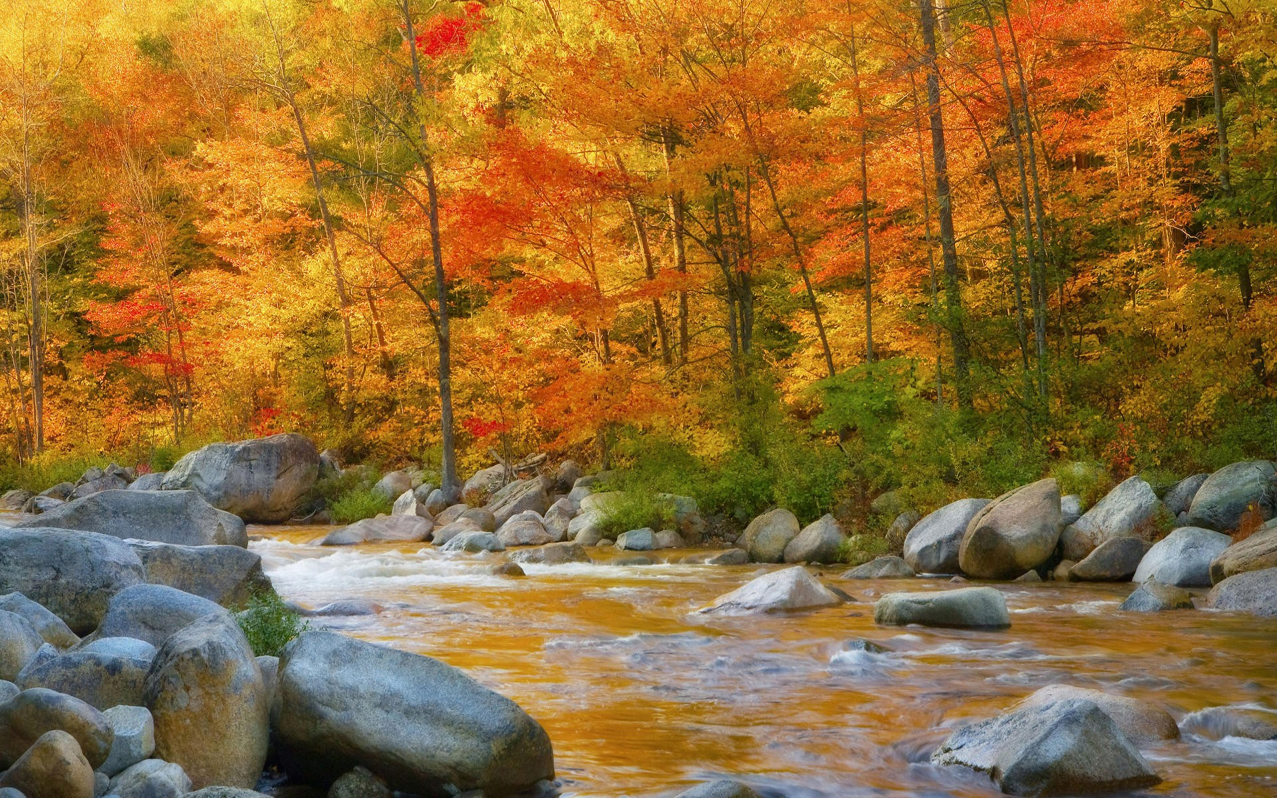 Autumn River HD Wallpaper   Page 5 of 5   WallpaperAsk 2560x1600