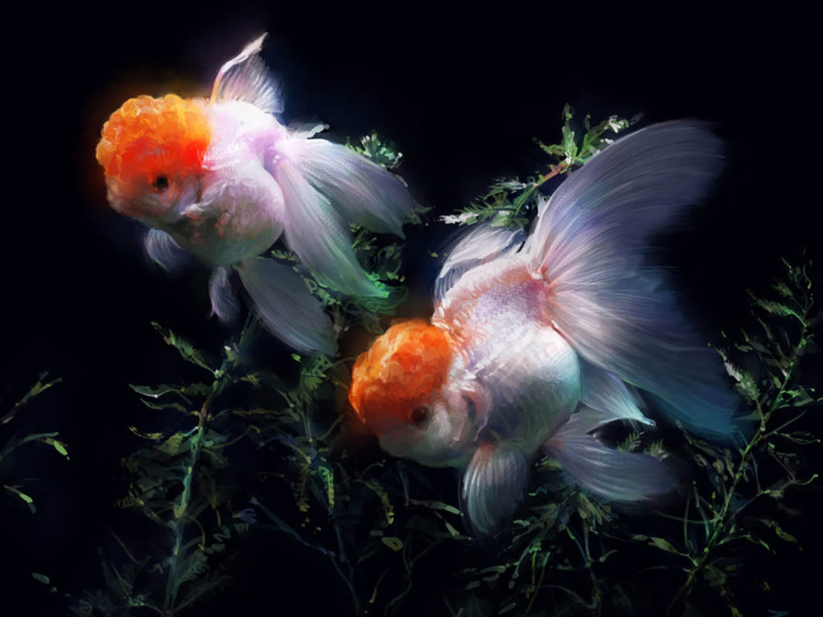 Gold Fish In Water Goldfish in Glass Tub Wallpapers of Gold Fish 1600x1200