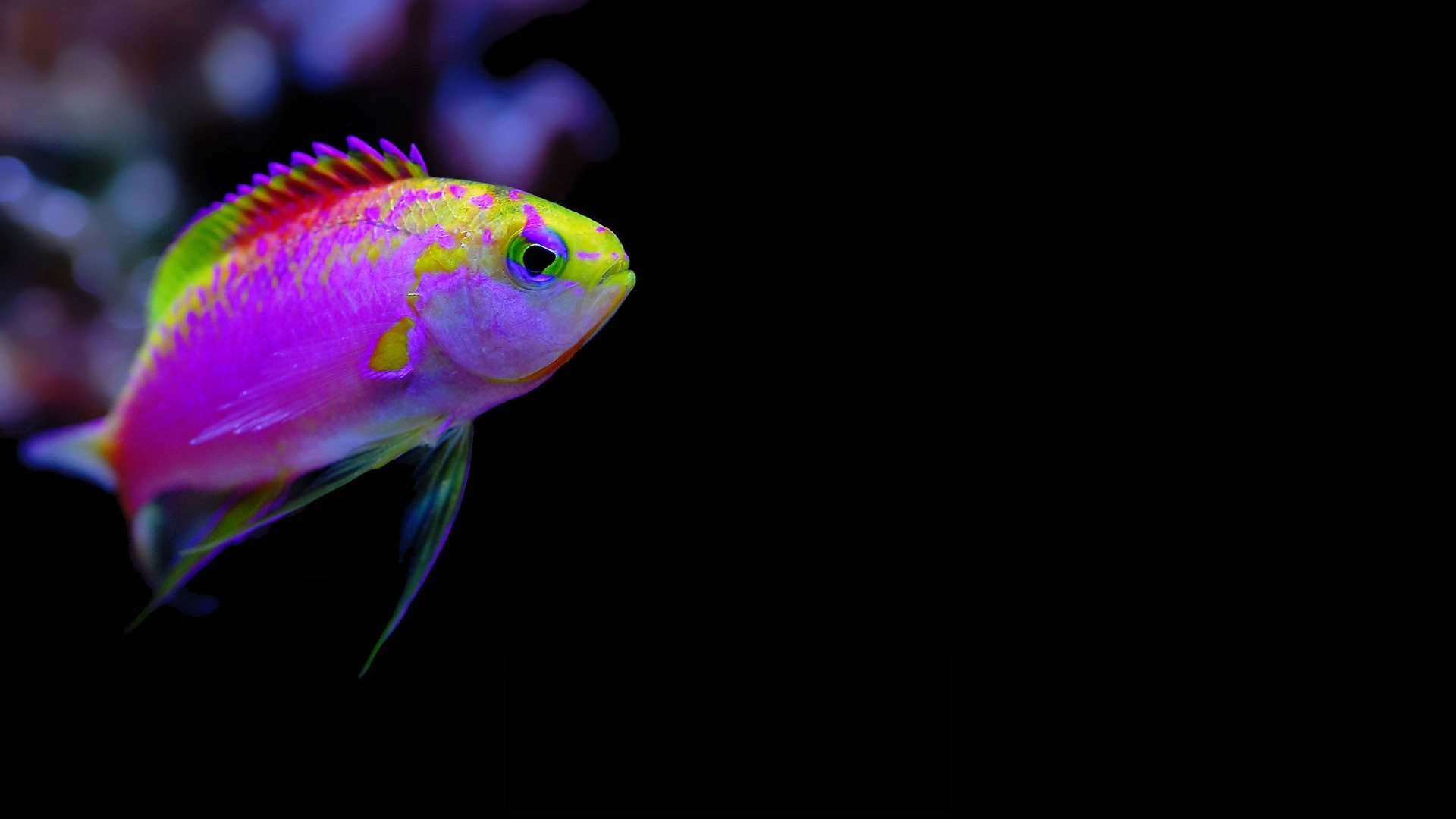 Fish Underwater Cartelthemes Wallpaper 1920x1080 Full HD Wallpapers 1920x1080