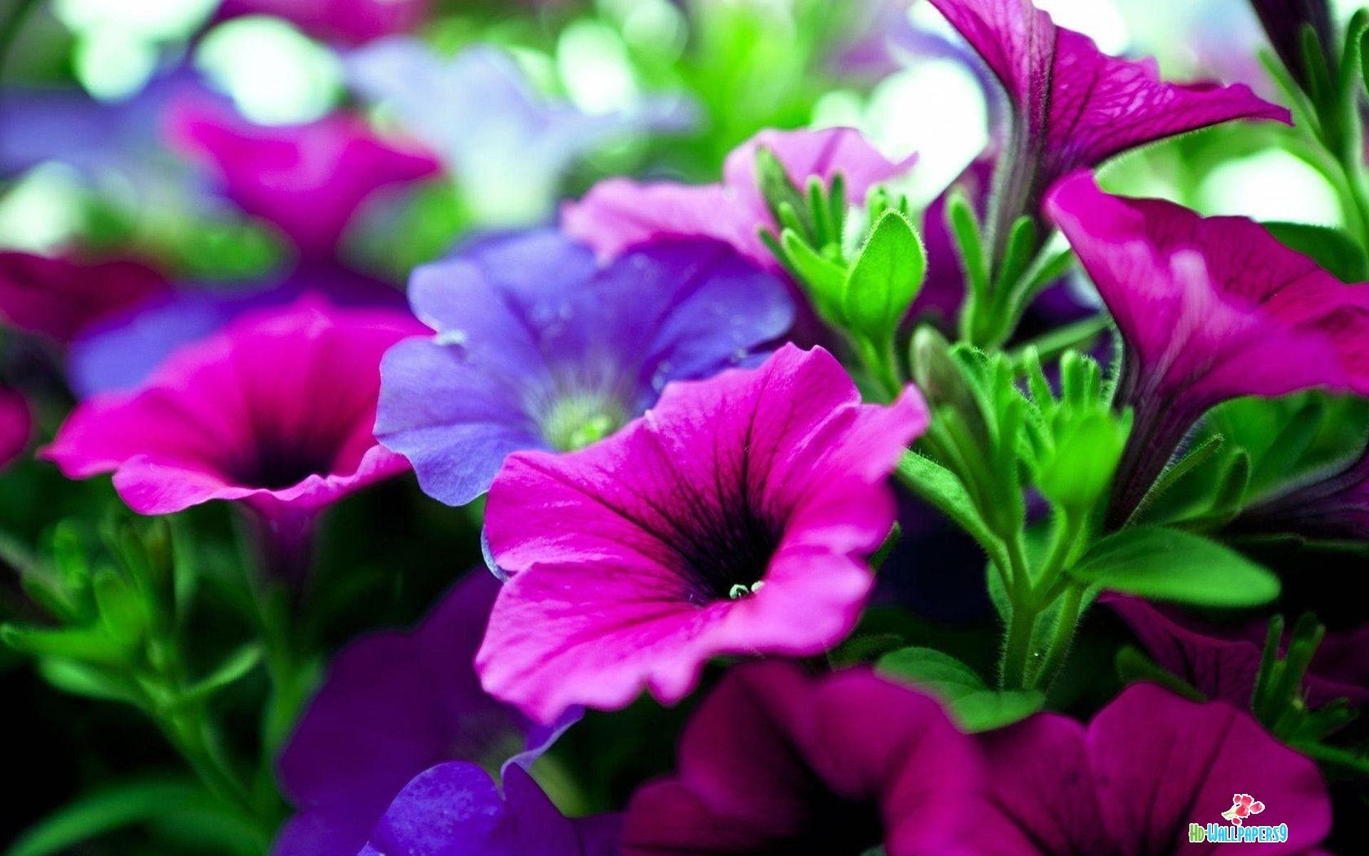 Desktop Wallpaper Flowers High Resolution - WallpaperSafari