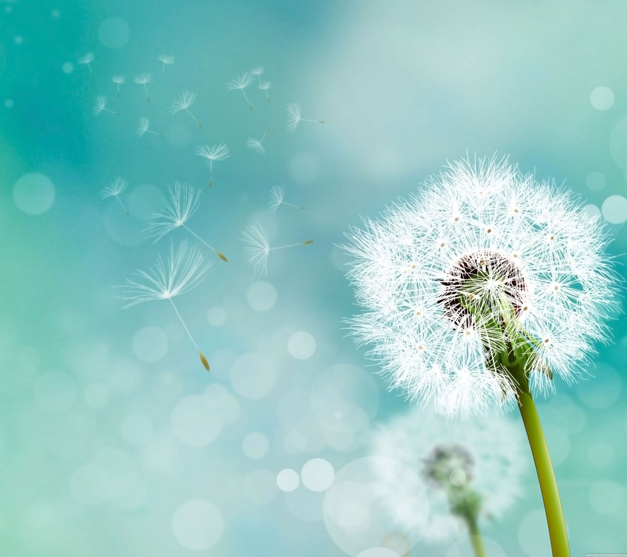 Dandelion backgrounds 2160x1920 Samsung Galaxy S4 Wallpaper HD_Samsung ...