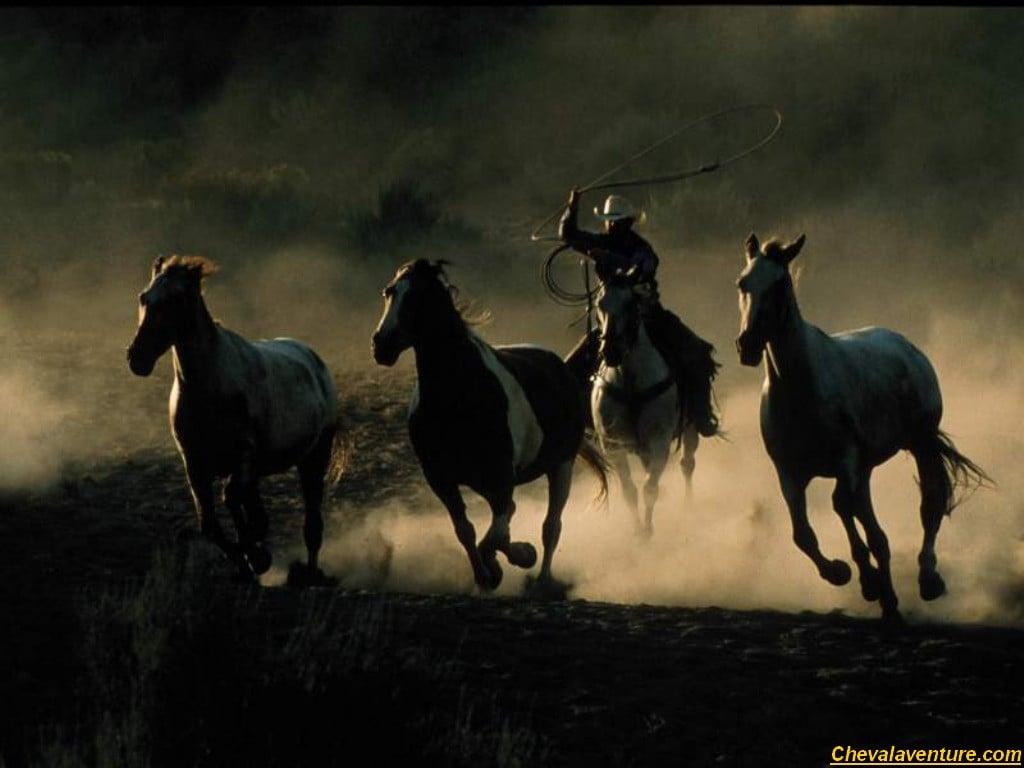 cowboy cowgirl Wallpaper Wallpapers fond dcran fonds decrans 1024x768