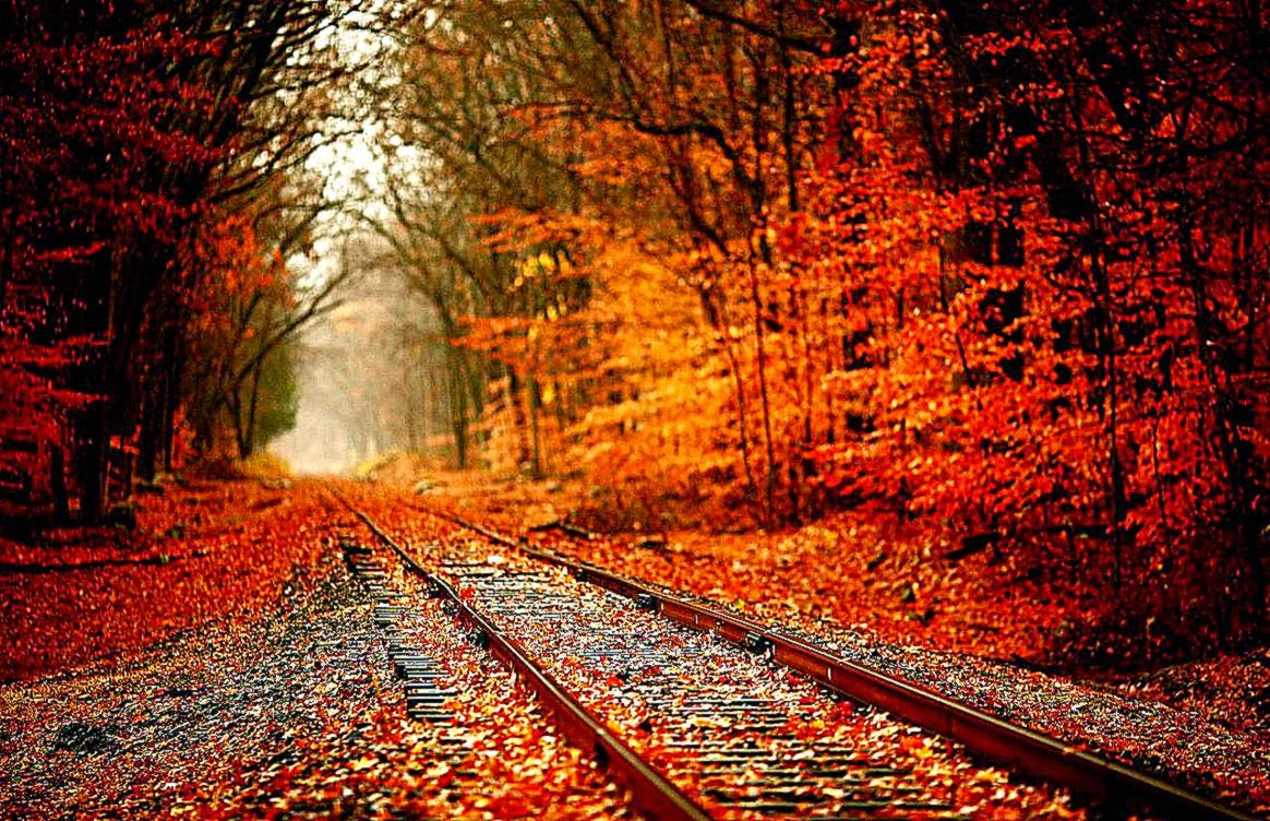 Fall Leaves Background Tumblr Amazing Wallpapers 1164x752
