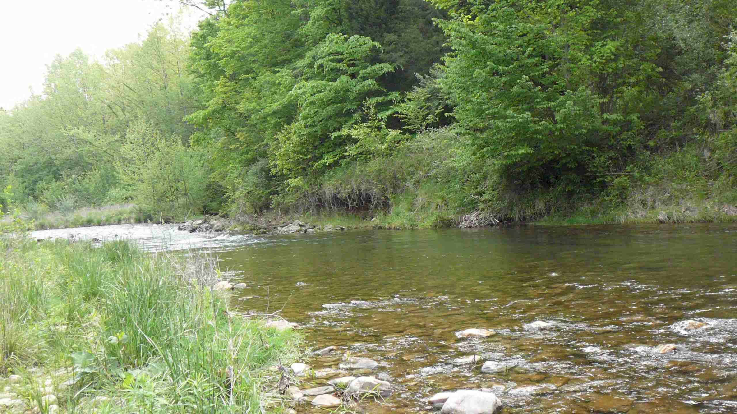 Smallmouth Bass Wallpaper Virginia smallmouth bass river 2560x1440