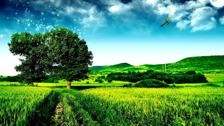 Nature Tree Go Green HD Wallpaper Nature Design Pinterest 736x414