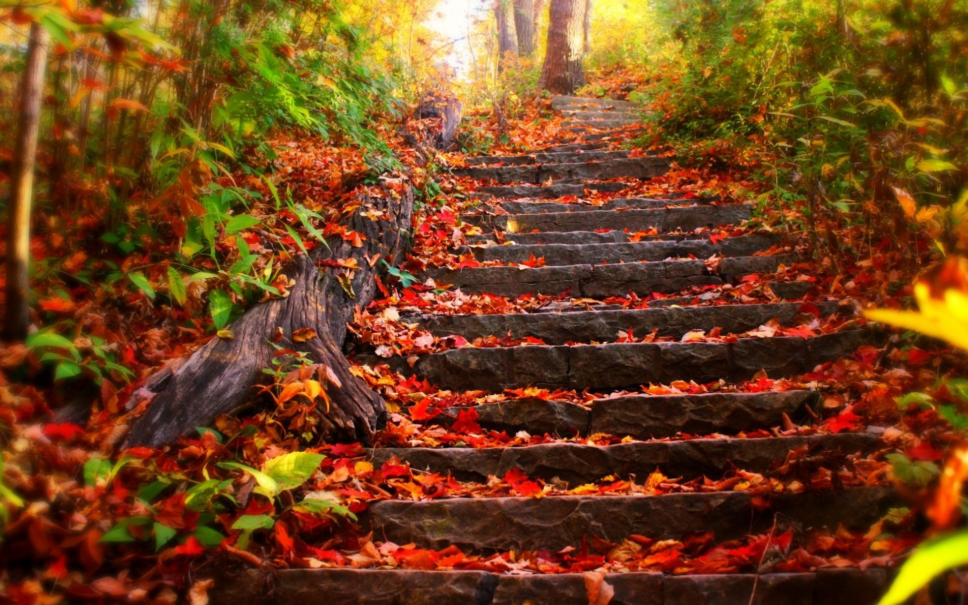 stairs park trees leaves autumn fall wallpaper background 1920x1200