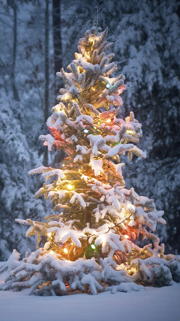 christmas background iphone winter wallpaper iphone 6 plus wallpapersafari 10394