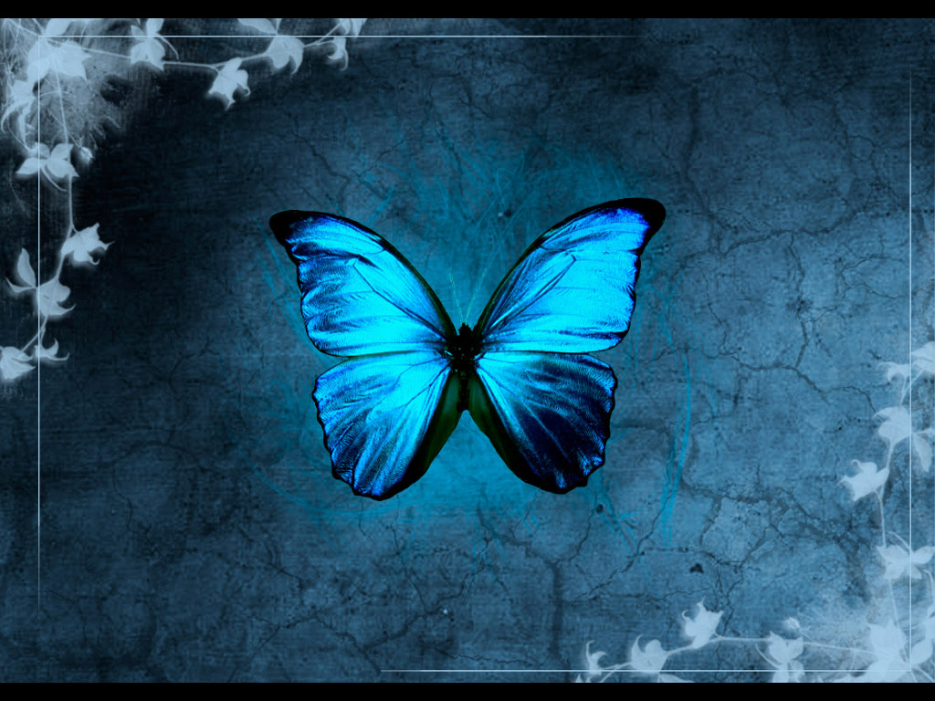 Blue Butterfly Backgrounds wallpaper Blue Butterfly Backgrounds hd 1024x768