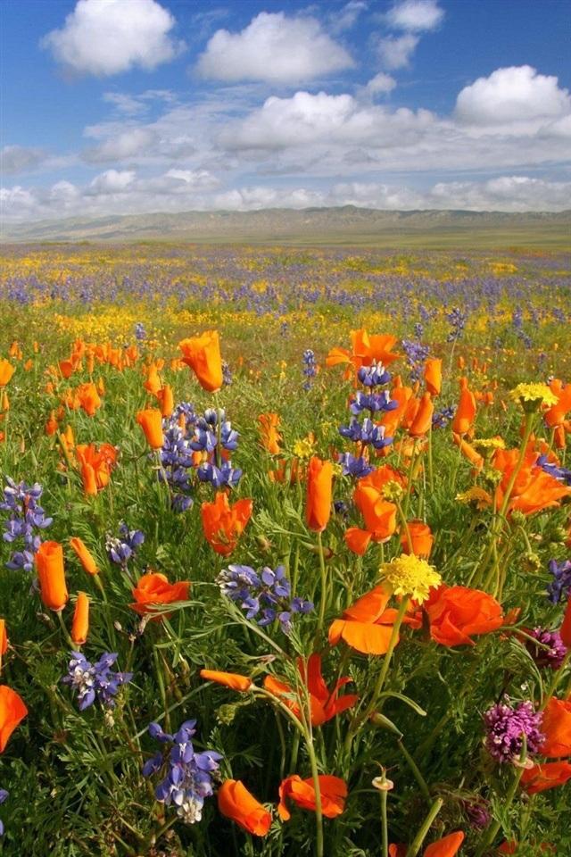 47 Beautiful Scenery Wallpaper Flower Wallpapers On Wallpapersafari