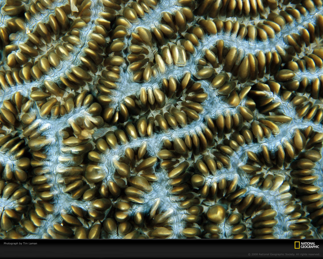 Coral Wallpaper Patterns Download wallpaper 1280 x 1280x1024