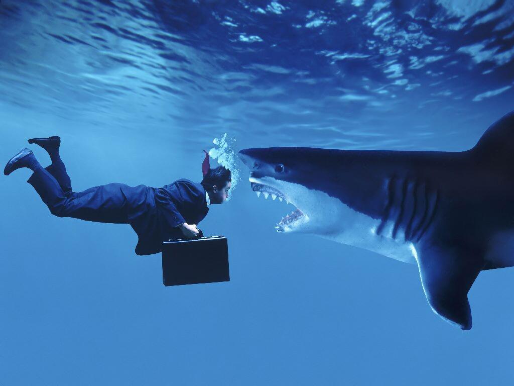 Shark 7 forex