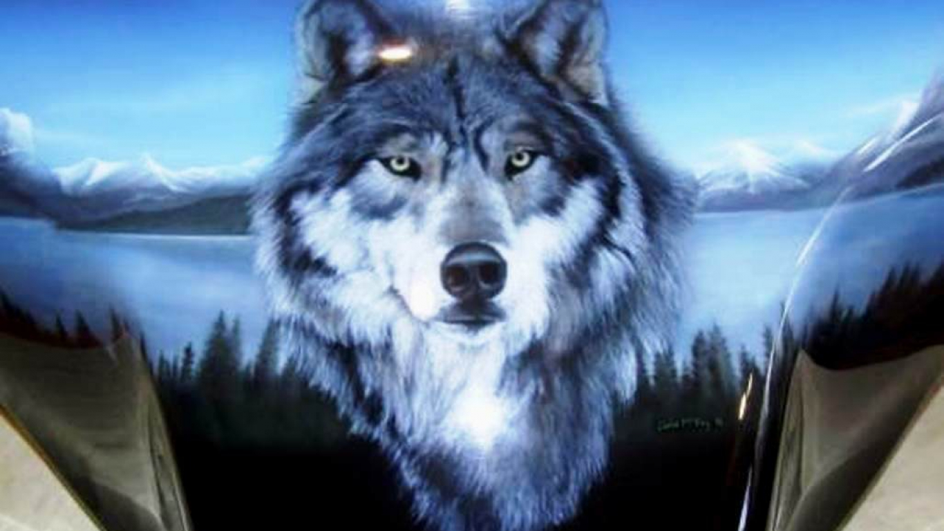 wallpaper HD Wolf Wallpapers 1366x768