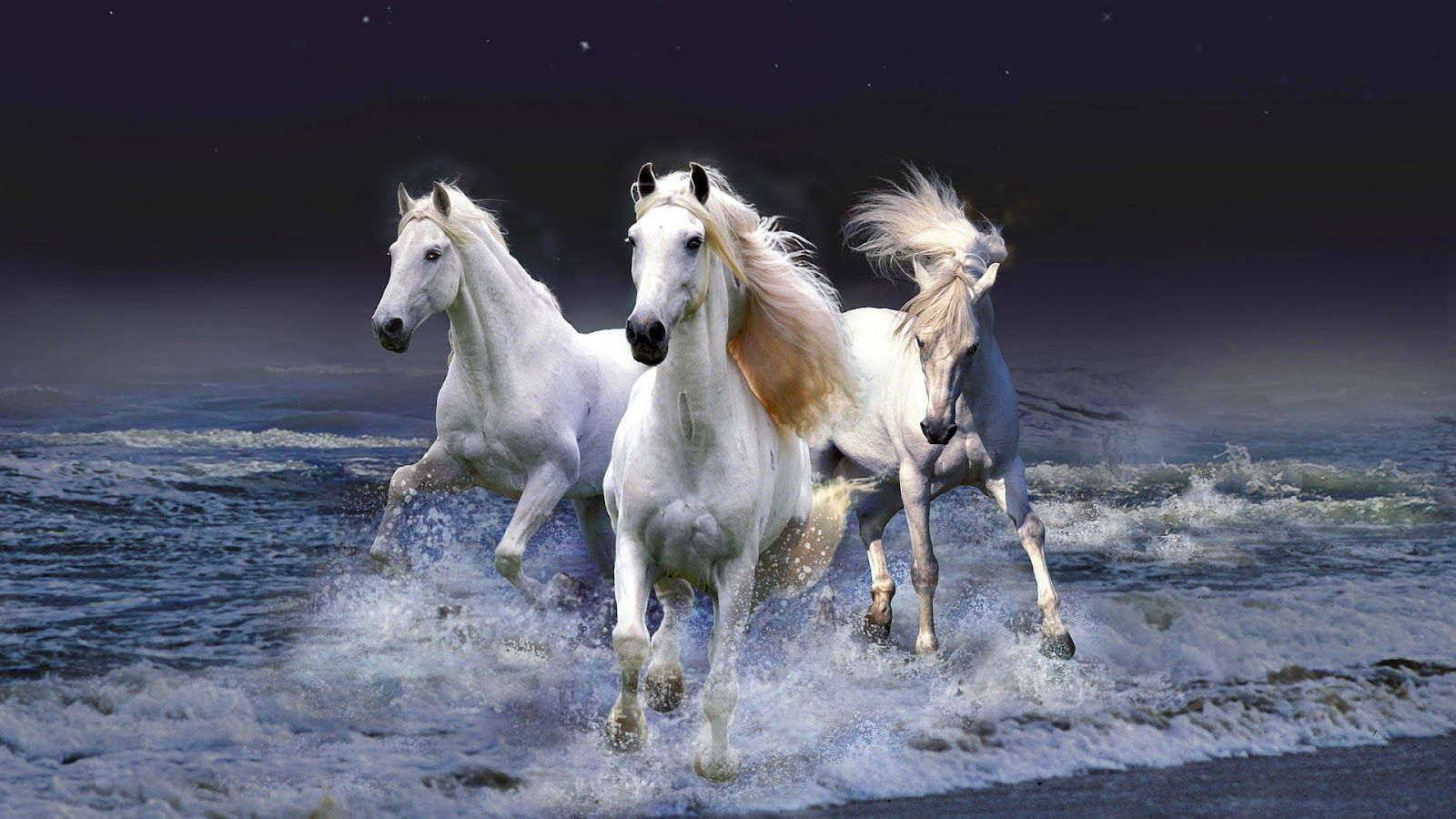Animated horse Backgrounds horses running through water or 1600x900