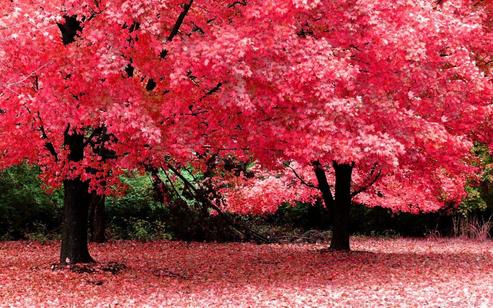 Autumn Season Nature Fantasy Wallpaper Hd Wallpaper 1600x1000