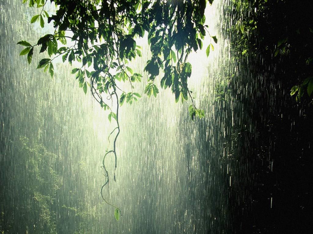rain wallpapers widescreen rain wallpapers hd rain wallpapers for 1024x768