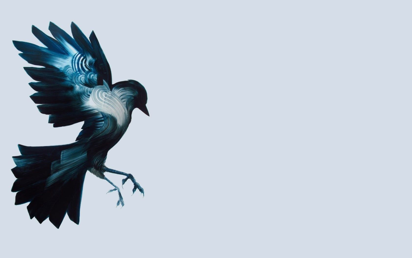 Vector illustration of blue and white bird wallpaper birds 1680x1050