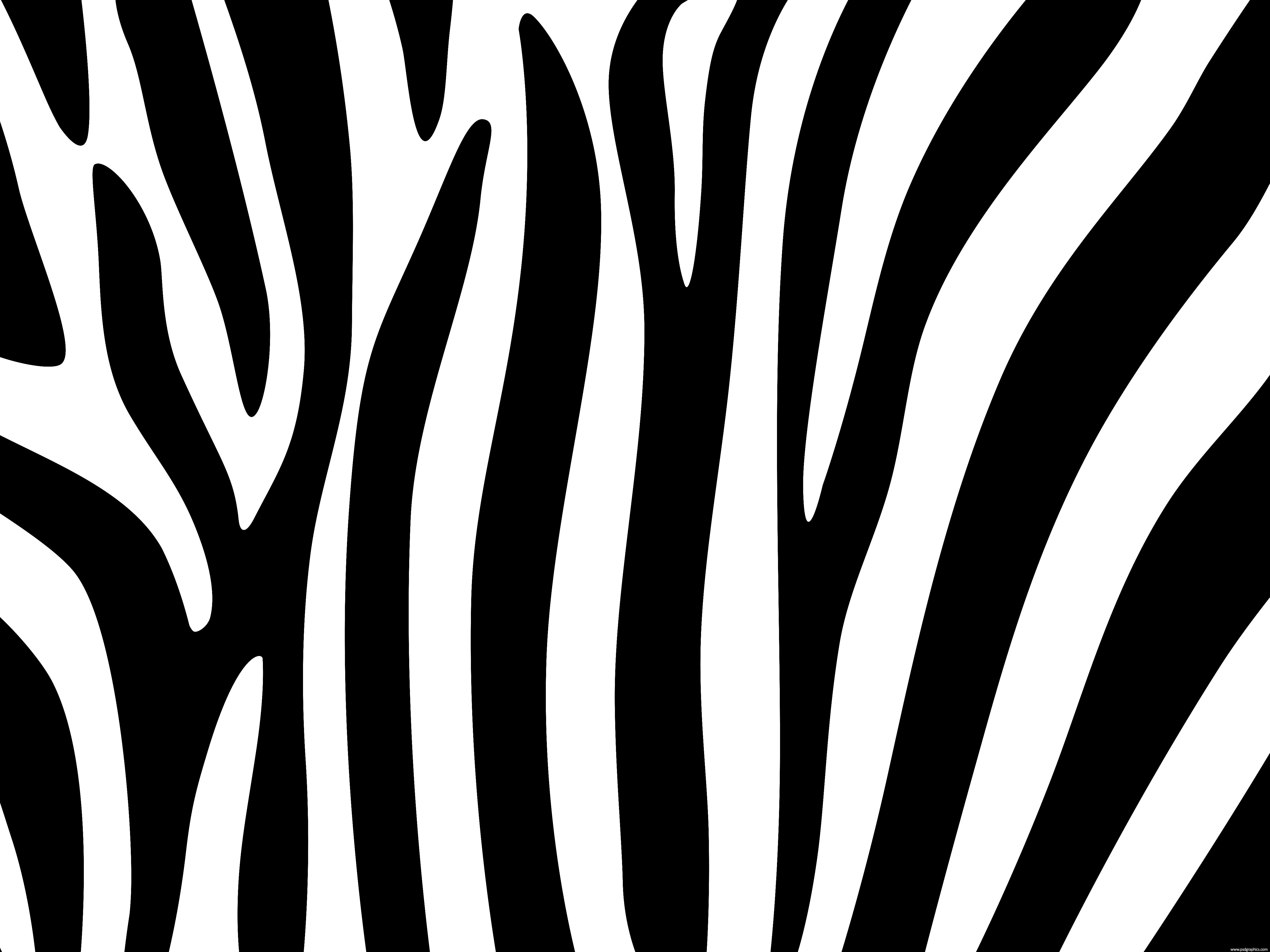 Zebra stripes design PSDGraphics 5000x3750