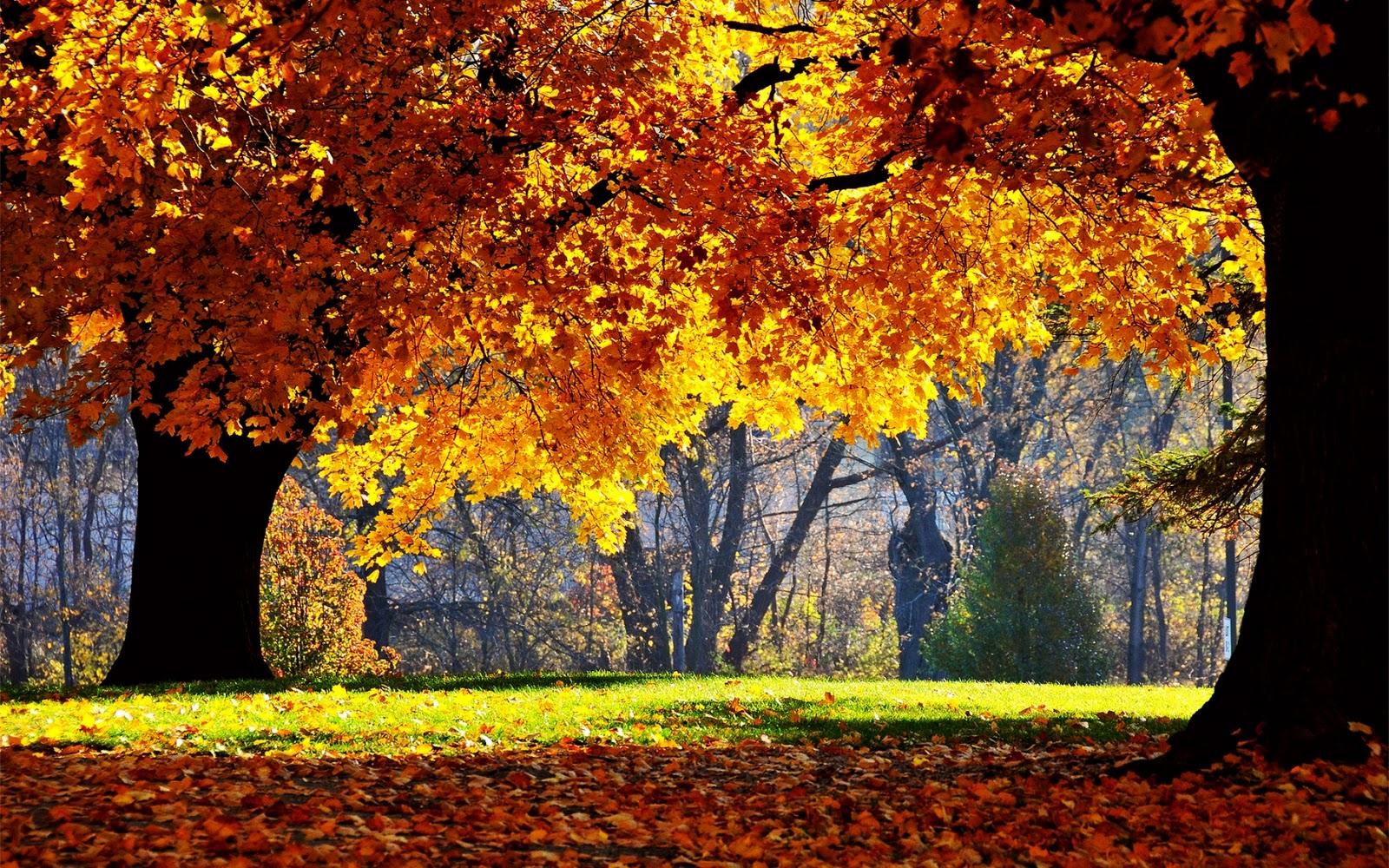cute fall desktop wallpaper 1600x1000
