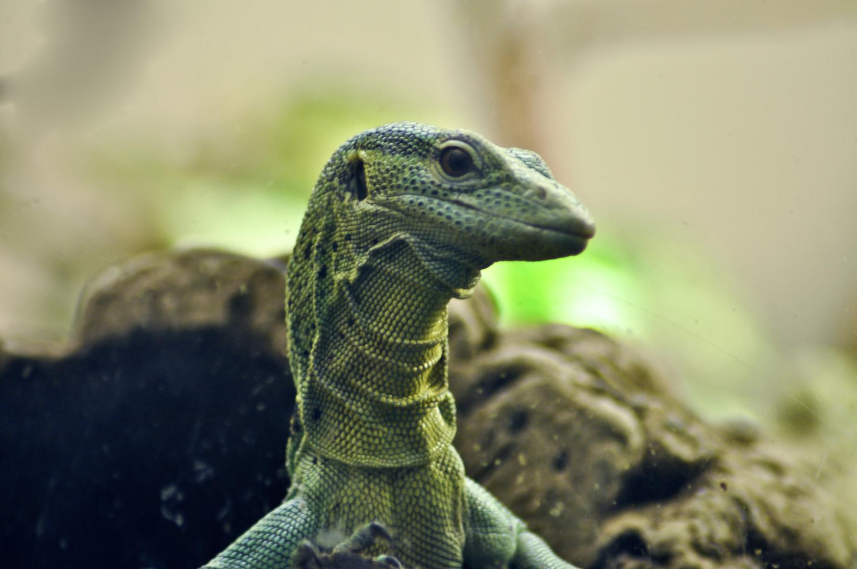 H D Reptiles Reptile HD Wallpaper -...