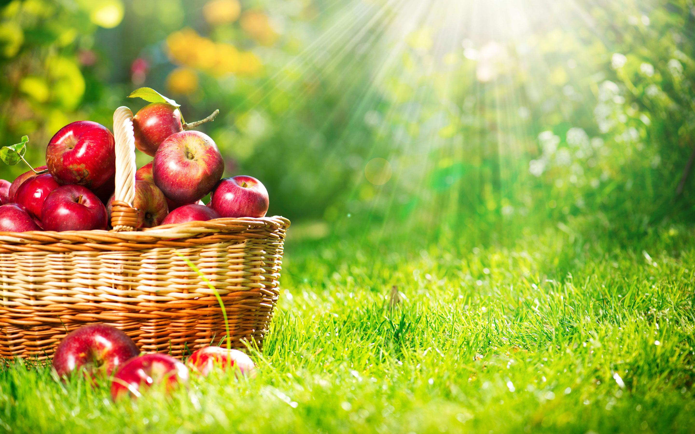 apple pics dowload fruits hd pics fruits list with pics wallpaper 2880x1800