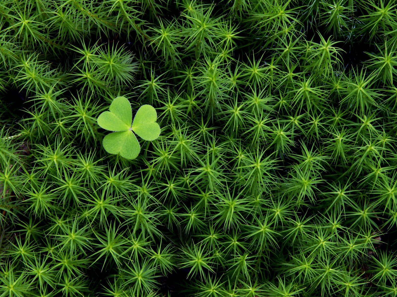 Happy St Patricks Day 2012 PowerPoint Backgrounds Download 1600x1200