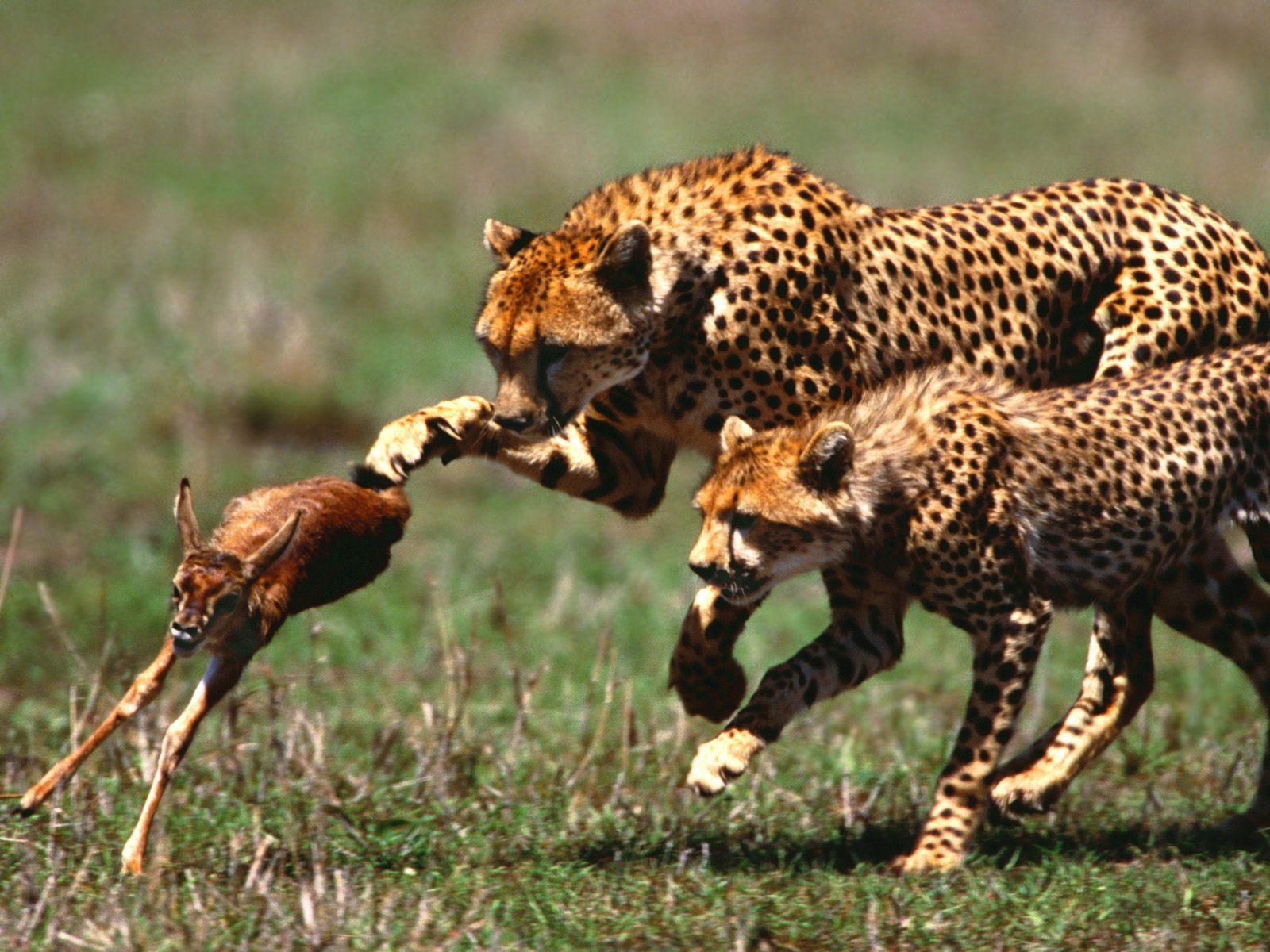 Wallpapersafari: African Animals Wallpaper